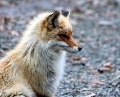 狐 お面 なぜ